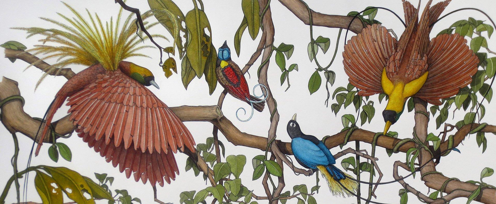Scientific Illustration Workshops: Birds & Bones