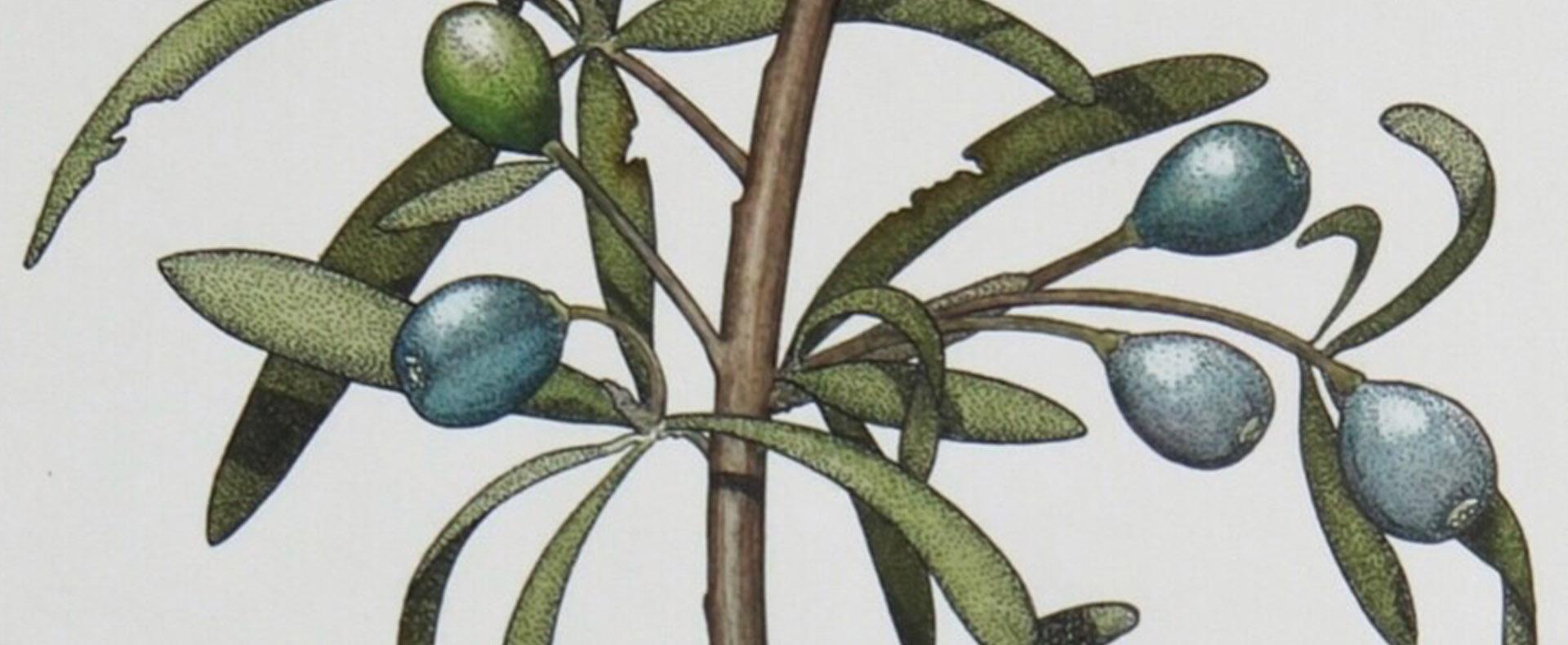 Scientific Illustration Workshops: Plant Studies